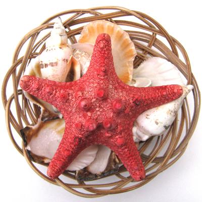 shellbasket
